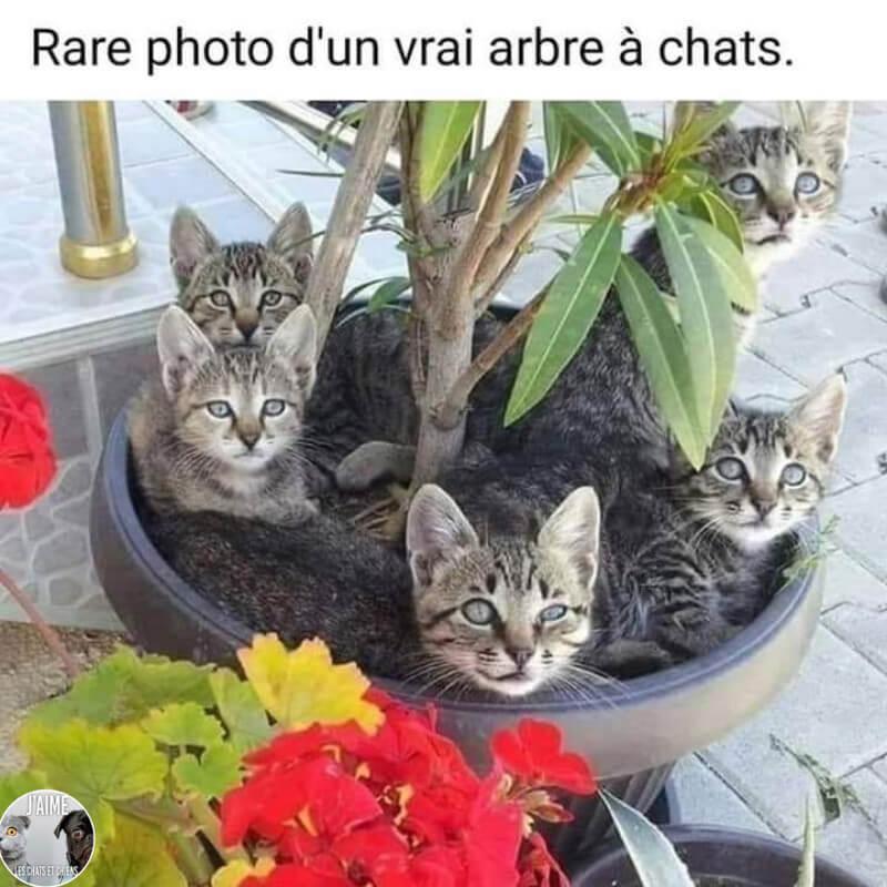 Nous avons besoin d'arbres à chats